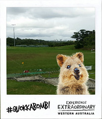 Photo of Quokka